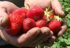 Operatorii din agricultură ecologică au cerut autorităţilor suplimentarea fondurilor alocate pentru sprijinirea producătorilor aflaţi în perioada de conversie