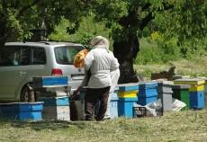 Producția de miere din acest an va fi mai slabă față de 2012