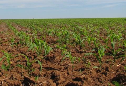 Credite agricole de la Banca Comercială Carpatica