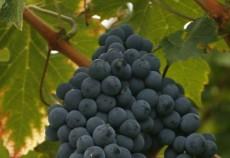 Romania se numara printre cei mai importanti 15 jucatori de pe piata mondiala a vinului