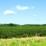 Executivul a aprobat o hotărâre prin care Ministerul Agriculturii (MADR) va garanta în cuantum de până la 50% creditele acordate arendaşilor care vor să cumpere terenul agricol pe care îl exploatează.