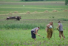 Agricultorii care nu au depus cererea de subvenție pe suprafață o mai pot face până cel târziu pe 10 iunie.