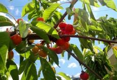 Producători ecologici Bihor