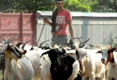 Salariile angajaților din agricultură, silvicutură și pescuit au intrat la apă în 2012