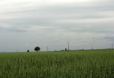 Preturile mici la cereale risca sa puna pe butuci afacerile micilor fermieri