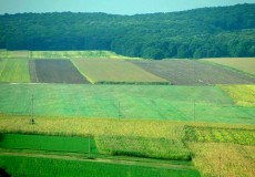 Cum autoritățile acționează din inerție și nu în folosul lor, fermierii s-au pus pe treabă și au elaborate o lege pentru comasarea terenurilor agricole și a celor silvice pe placul lor.