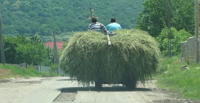 MADR vrea subventii mai mici pentru fermele de subzistență