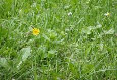Ordonanţa de urgenţă care modifică Legea Pajiştilor se află în dezbatere la Comisia de Agricultură din Camera Deputaţilor şi ar putea fi aprobată săptămâna viitoare, potrivit ministrului Agriculturii, Daniel Constantin.