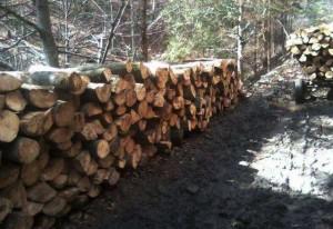 lemne.3