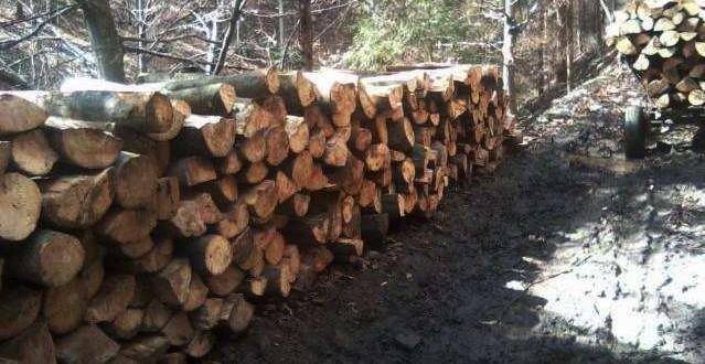 lemne.31