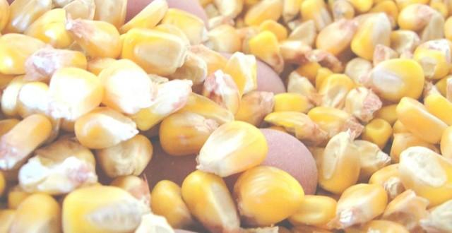 condiţiile de autorizare a substanţei active fipronil şi de interzicere a utilizării şi a vânzării seminţelor tratate cu produse de protecţie a plantelor care conţin această substană activă