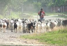 subventie oi si capre