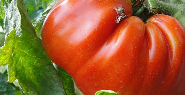 subventii pentru agricultura ecologica