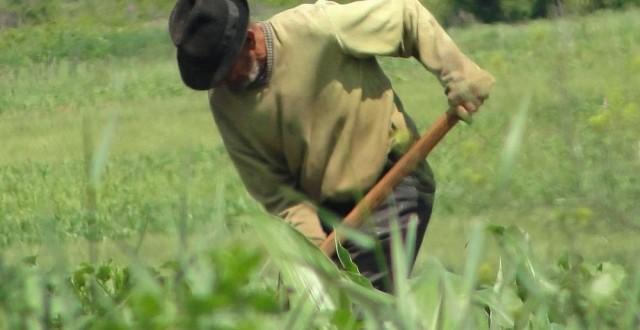 tanar fermier