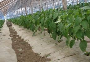 Cererile de solicitare a ajutorului specific acordat pentru îmbunătăţirea calităţii produselor agricole în sectorul de agricultură ecologică se pot depune până la 29 noiembrie 2013, inclusiv, a anunțat Agenţia de Plăţi şi Intervenţie pentru Agricultură (A.P.I.A.).