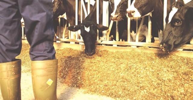 În perioada ianuarie-august 2013, producția realizată de procesatorii din România a sporit, ca urmare a creșterii cantității de lapte brut importat, potrivit datelor publicate de Institutul Național de Statistică (INS).