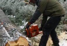 Normele referitoare la provenienţa, circulaţia şi comercializarea materialelor lemnoase, dar şi regimul spaţiilor de depozitare a materialelor lemnoase şi al instalaţiilor de prelucrat lemn rotund au fost aprobate prin Hotărâre de Guvern, arată un comunicat remis de Departamentul pentru Ape, Păduri şi Piscicultură.