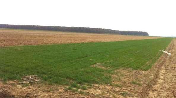 teren-agricol