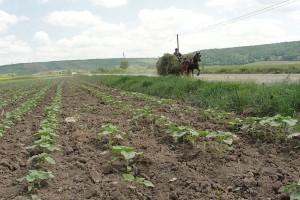 vanzarea terenurilor agricole