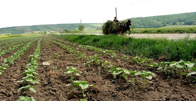 vanzarea-terenurilor-agricole