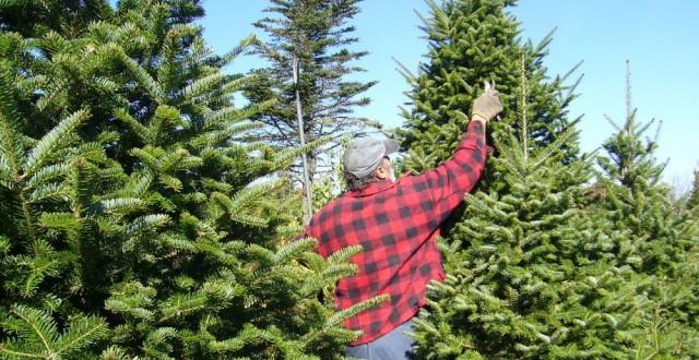 Pomul de Crăciun se dă în rate
