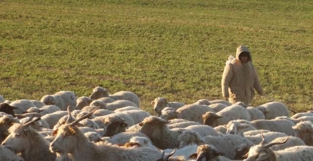 sacrificari de oi si capre