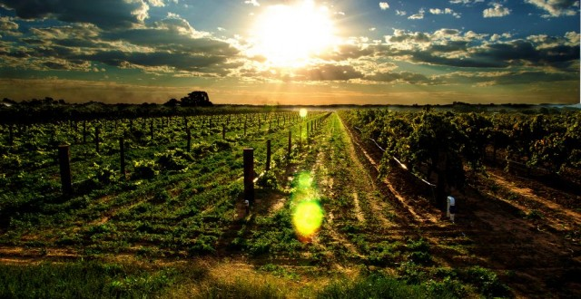 agricultura inteligenta