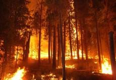incendiu padure conifere