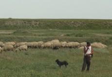 agricultorii-romani