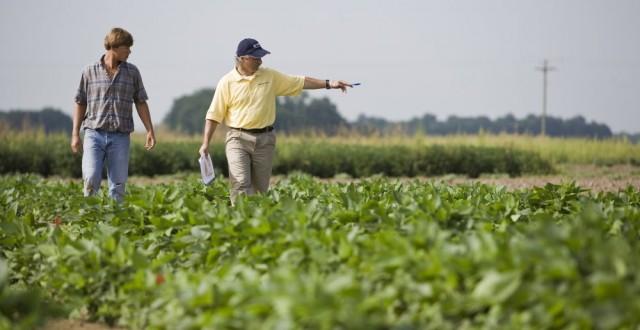 soia modificata genetic