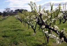 calendarul lucrarilor agricole