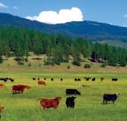 vanzare teren agricol