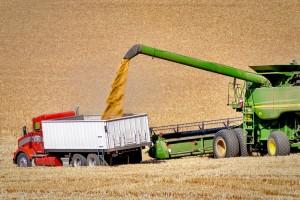 export cereale