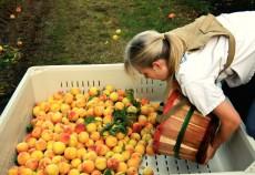 import fructe
