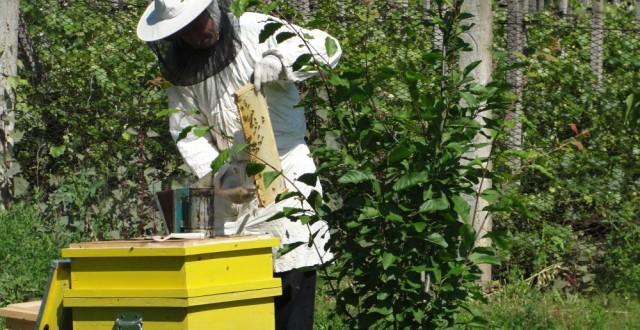 productia de miere
