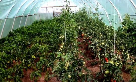 1vand-legume