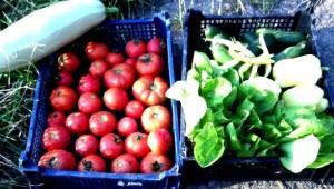 legume-eco