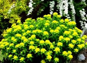 plante-ornamentale-aromatice-perene
