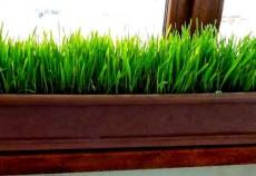 suc-grau-verde