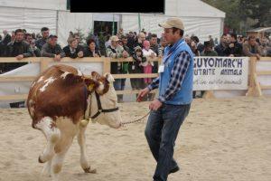 Kanabe Gergely, tanar fermier campion la accesat fonduri europene