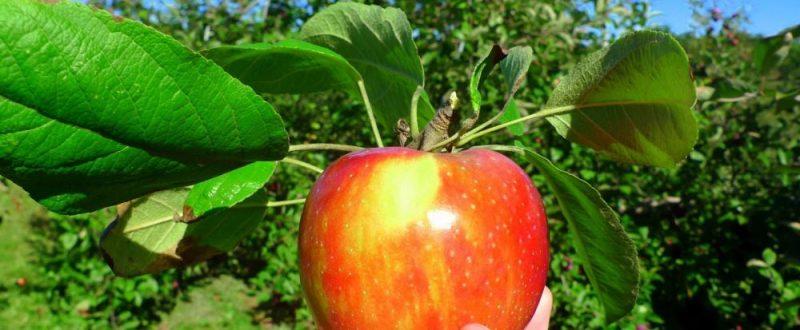 bilantul anului agricol 2014