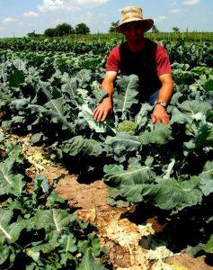 cultivare-broccoli
