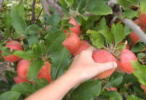 despagubiri pentru producatorii de fructe si legume afectati de embargoul rusesc