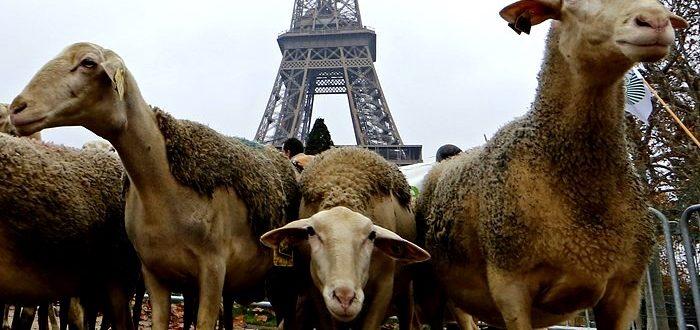 protest-agricultori-francezi