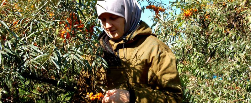 cultivare-catina