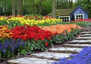 Rasaduri plante ornamentale