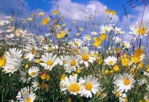 cultivarea plantelor aromatice