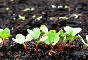 culturi-agricole-primavara