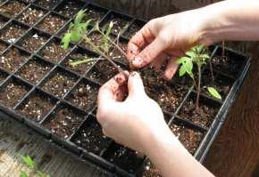 cercetare agricola