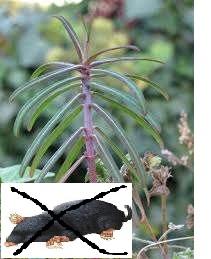 20492793_1_1000x700_planta-anti-cartita-oradea